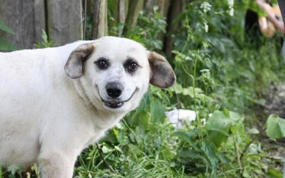 Состојбите во големите компании прикажани преку смешни кучиња