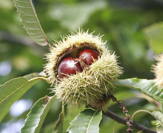 Најдобрите есенски плодови за вашето здравје