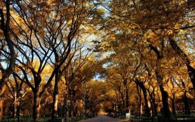 Есенска магија во Њу Јорк