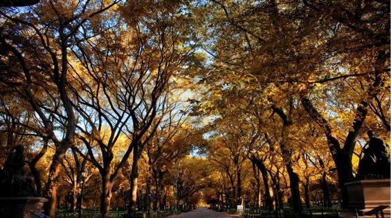 Есенска магија во Њујорк