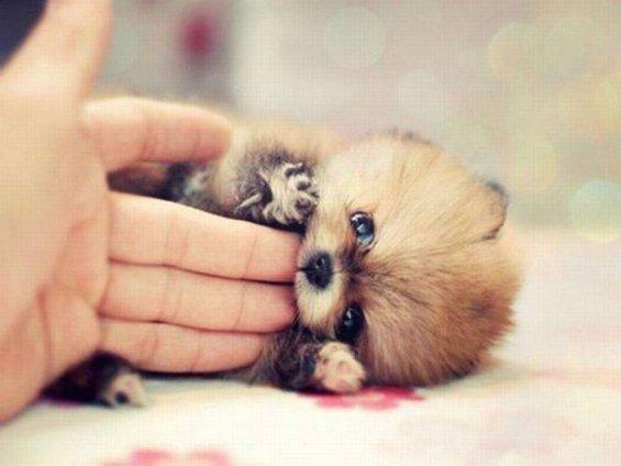 Неодоливи животни кои ќе го стопат вашето срце