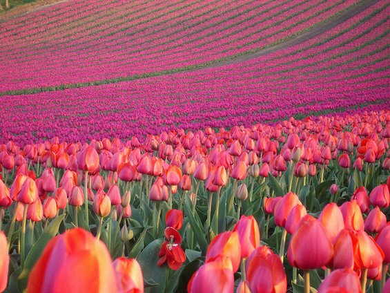 Воодушевувачки дестинации за љубителите на цвеќиња
