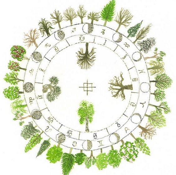Кое дрво сте според датата на раѓање?