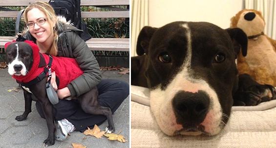 Посвојувањето куче во неговите последни часови можеби беше најдобрата одлука во мојот живот...