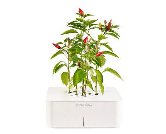 Дигитализирано цвеќе кое расте без да го посадите