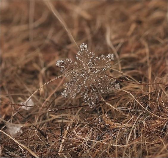 Како изгледаат снегулките одблиску?