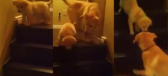 Слатко кученце и неговата прва средба со скалите