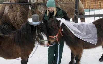 Силвер и Зорка засекогаш - пони коњчиња кои стапија во брак
