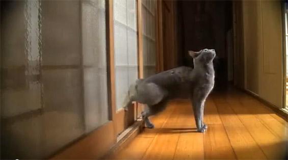 Мачка тропа на врата за да ѝ отворат