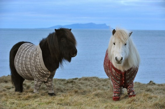 2 пони коњчиња облечени во џемпери го промовираат шкотскиот туризам