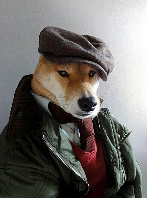 Куче дотерано во машка дизајнерска облека
