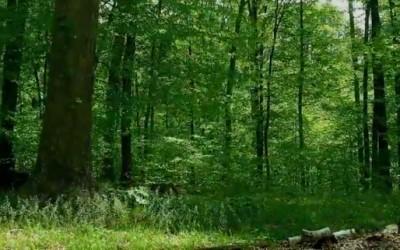 Една година во шума