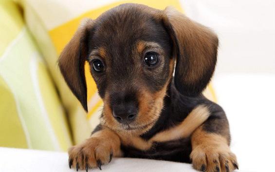 Најслатките кученца на светот
