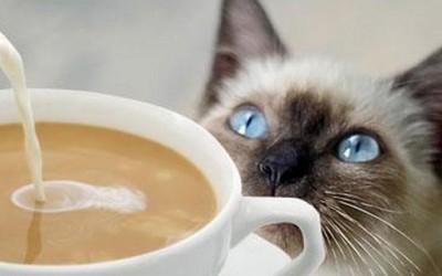 Што и се случува на мачка кога ќе претера со пиење на кафе?