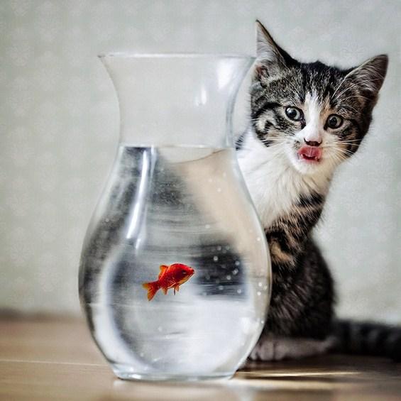 Интересни животинки кои ќе ви ја стоплат душата