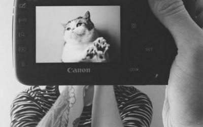Дали миленичињата навистина наликуваат на своите сопственици?