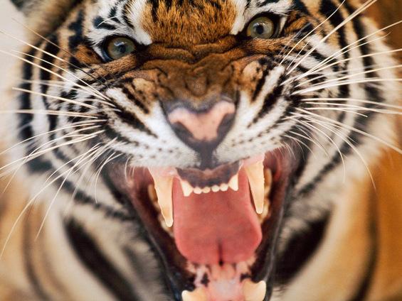 5 начини на кои животните покажуваат човечки емоции