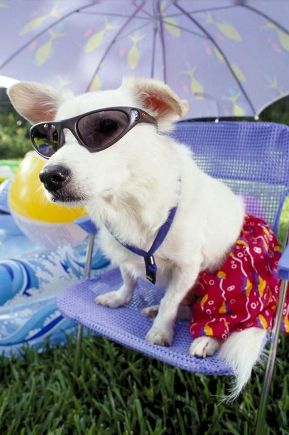 Животни кои се тотално подготвени за доаѓањето на летото