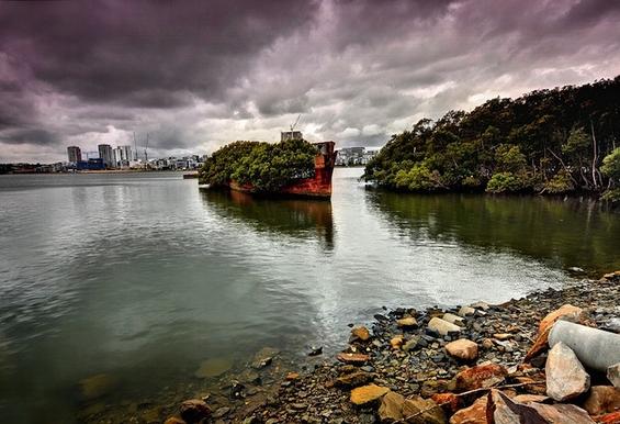 Несекојдневна шума израсната во напуштен брод стар 102 години
