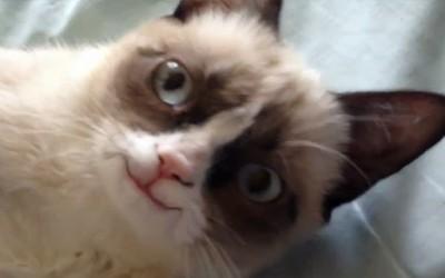 Намуртениот мачор се насмевна