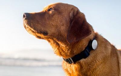 Паметен ремен за вашето куче