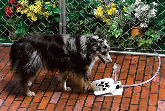 (2) Кул и практична фонтана за кучиња