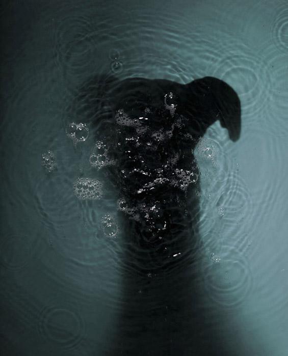 (3) Емотивни портрети на напуштени кучиња