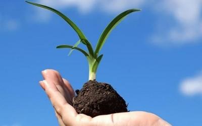 Како да го посадите семето за посреќен живот?