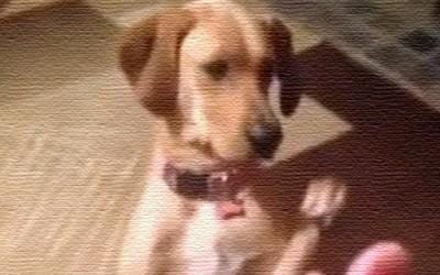 Куче се преправа дека го погодило куршум