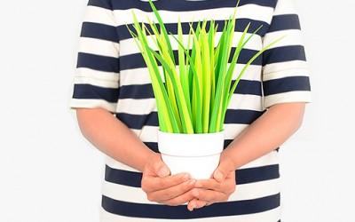 Растение кој секој би го посакал во својата канцеларија