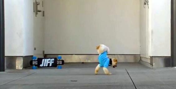 Куче со неверојатни актерски способности