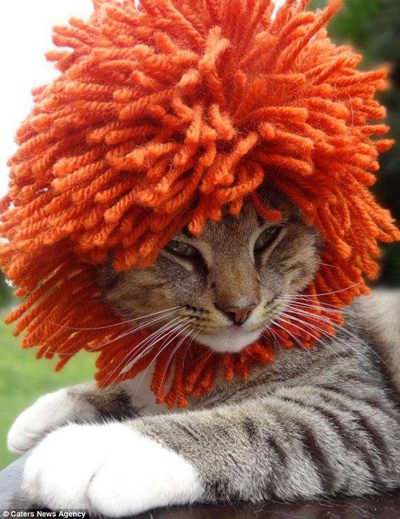 Мачки дотерани со штосни капи