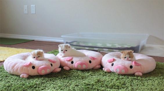 Три мали мачиња на плишани перничиња