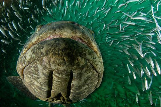Океански фотографии кои ќе ви го земат здивот, но ќе ви ги наполнат очите