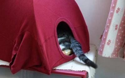 Направете сами удобна куќичка за вашата мачка