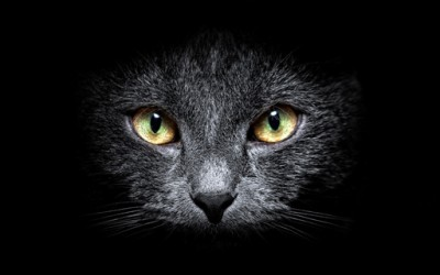 Погледнете го светот преку очи на мачка