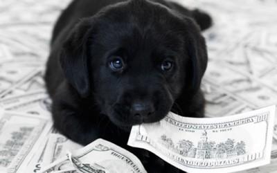 Животни кои се побогати од тебе