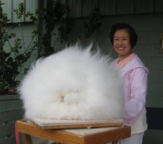 Побушави зајаци од овие немате видено