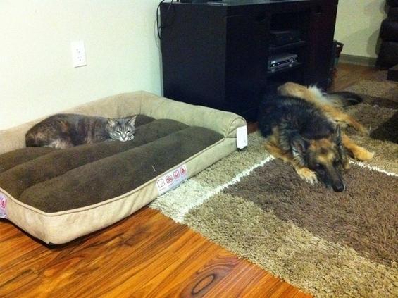 Мачки што им се прават газди на кучињата