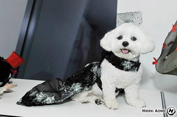 Висока мода за домашни миленици