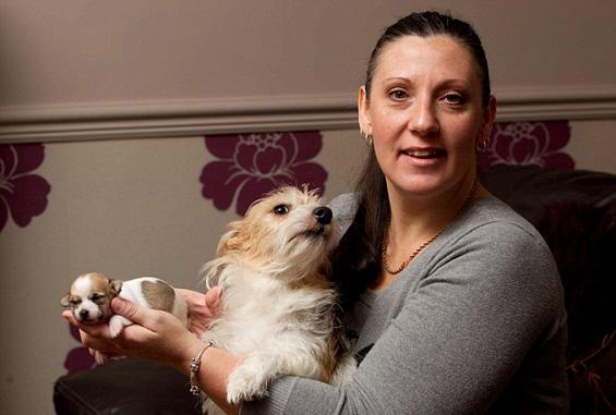 Запознајте ја Валери – кученце со прекрасно срце на крзното
