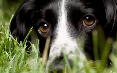 5 начини на кои кучињата ви ги читаат мислите
