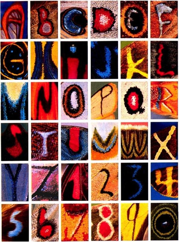 Неверојатно откритие: целата азбука сокриена во крилцата на пеперутките