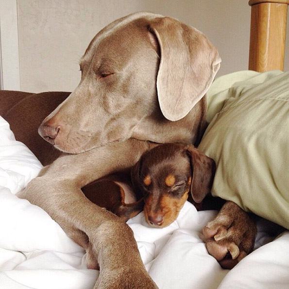 Големо куче и мало кутре – неразделни пријатели