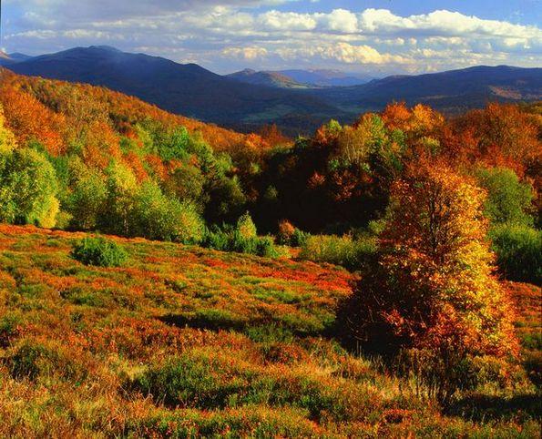 Златна есен во Полска
