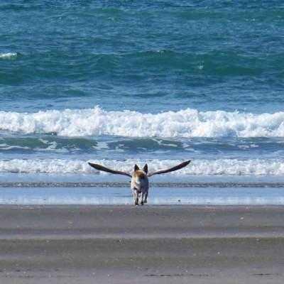 Куче со крилја