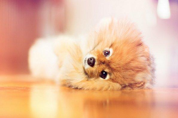 Неодоливо кутре кое ќе ви го стопи срцето