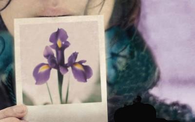 Книга: Тајниот јазик на цвеќињата – Ванеса Дифенбо