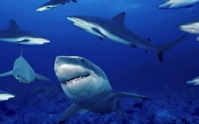 10 факти за ајкулите кои ќе ве изненадат