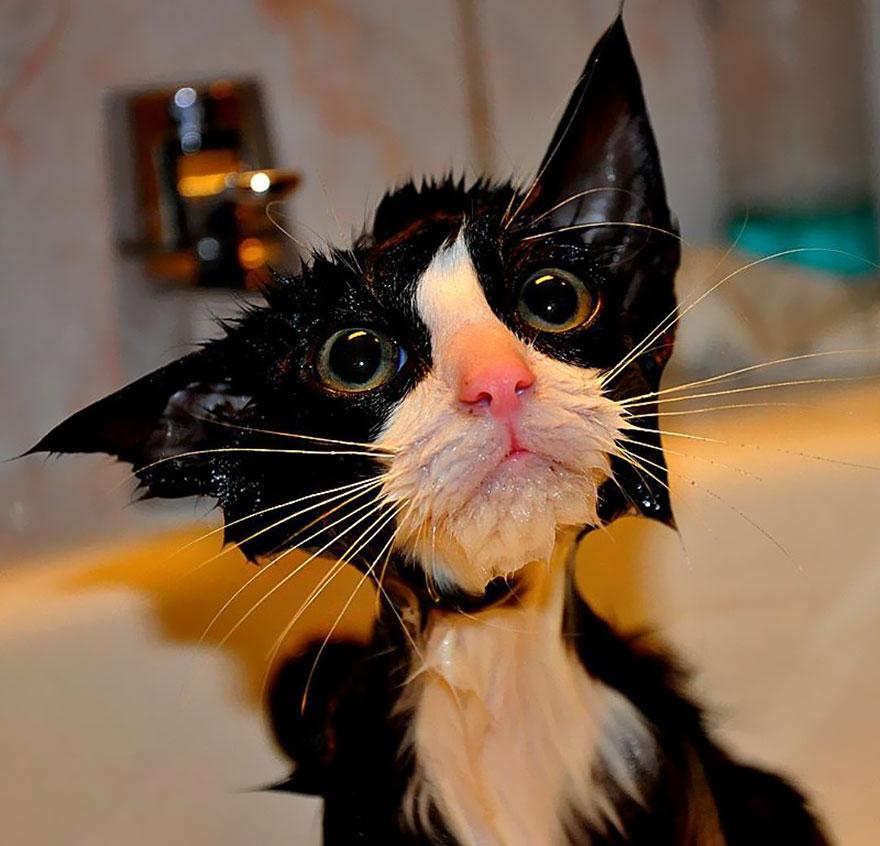 Кога мачките се бањаат...